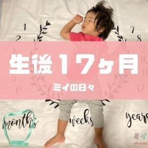 17ヶ月(1歳5ヶ月)の成長記録