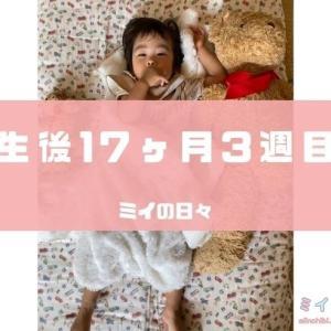 長女の定期身体測定結果生後533日(生後17ヶ月3週目)