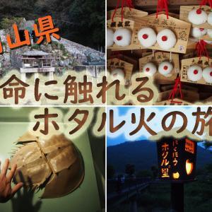 オブザイヤー的旅のススメ ~岡山・日本一のホタル火~