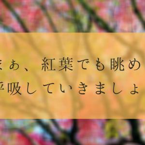 【写真】まぁ紅葉でも眺めて、深呼吸していきましょうよ。