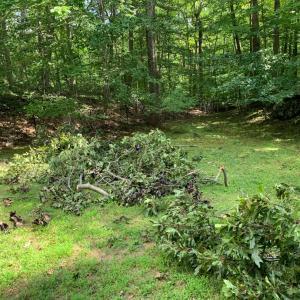 トロピカルストーム、インノーで、大木が中折れした。