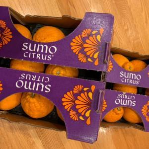 今年はデコポンを思いっきり食べました。Sumo Citrus