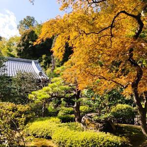 GOTO京都旅 鈴虫寺でのありがたいお話
