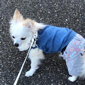レオちゃんの散歩