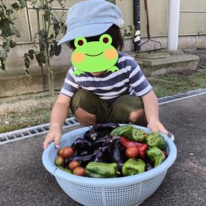 実家の野菜と子供たち