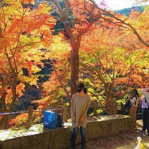 紅葉真っ盛りの高尾山