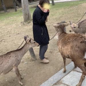 奈良にプチトリップ