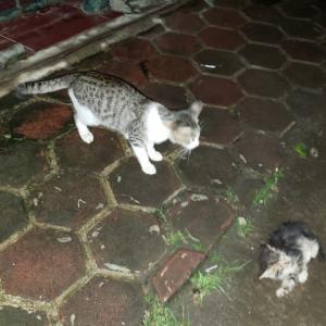 前々回の予告通り、子猫が我が家に…