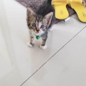子猫ミッキーに対する先住猫達の様子
