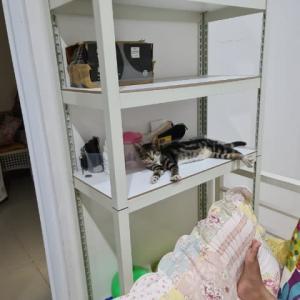 6匹の猫の集合写真