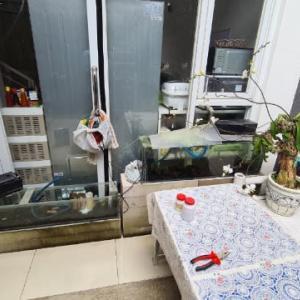 家で飼育している観賞魚の話