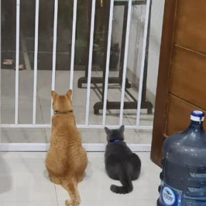 プルおばさんの猫嫌い