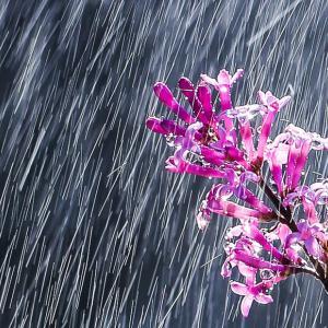 ゲリラ豪雨の定義と発生メカニズムについて、田舎で発生数が少ないのは何故?