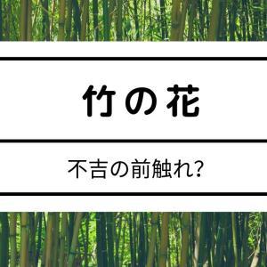 竹の花が咲くときに不吉なことが起きる?理由を知れば迷信とわかる