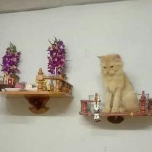 新シリーズ 猫神家一族の反乱
