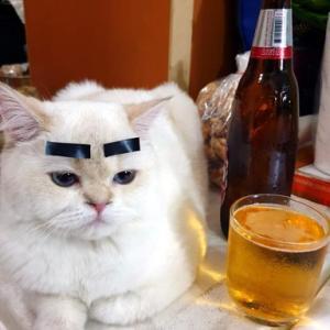 マオ=酔っ払い