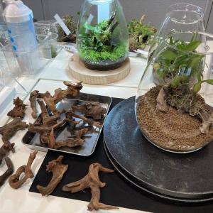 ADAネイチャーアクアリウム展覧会でミニパルダリウム制作ワークショップに参加してみた【NATURE AQUARIUM EXHIBITION 2021 TOKYO、ギャラリーAaMo、東京ドームシティ、アクアデザインアマノ、ガラスポットSHIZUKU、DOOA】