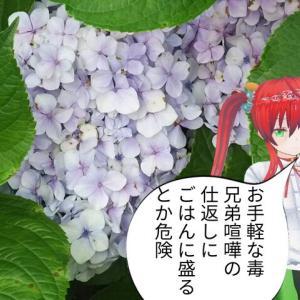 お手軽毒の花