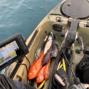 相模湾 中深海の釣りも分かってきました!