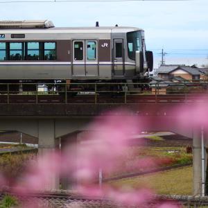 湖西線 桜全線1