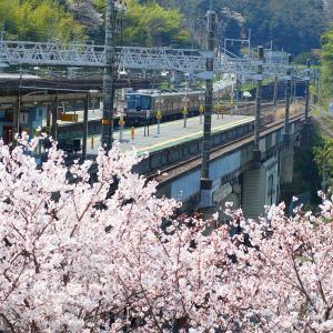 湖西線 桜全線2