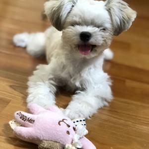 アサリお気に入り!犬用ひんやりベッドを購入しました!!