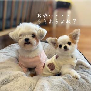 【プチプラ犬服】あさり&ほたて日記