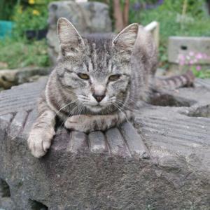 自粛を強要されない猫の方が優れている