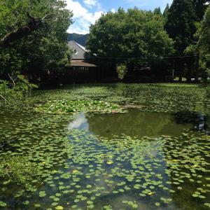八女星野村の池の山で夏の避暑☆