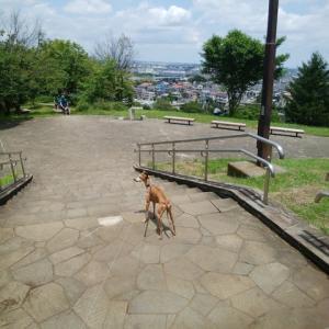 久しぶりの都立公園散歩♪