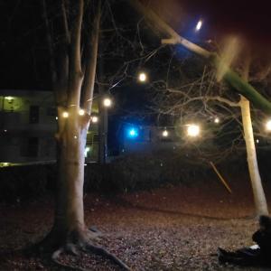 ライトアップされた草薙三角緑地でルナとの思い出に浸ってきたよ!