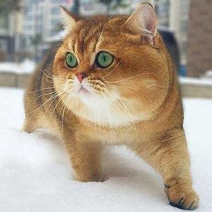 思わず二度見してしまう!Twitterの驚きをくれる可愛い猫たち