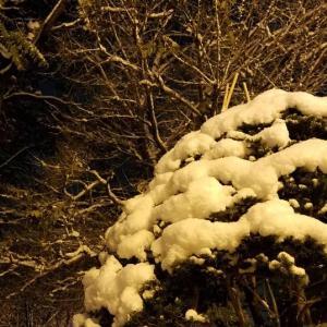 もうちょいゆっくり冬になっちくり~。