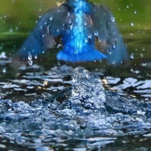 日比谷公園でオオルリをさがす
