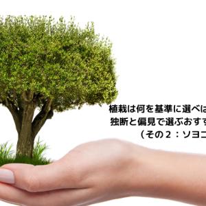 植栽は何を基準に選べばいいのか。 独断と偏見で選ぶおすすめの植栽(その2)