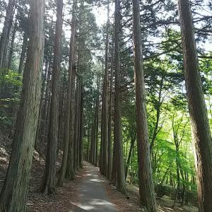 三峯神社5~奥宮参拝1・奇跡みたいにきれいな新緑~