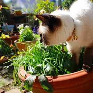 庭の日向ぼっこ*【美肌・ 美白タイプ】があって