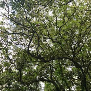 森林散策&野菜いっぱい健康生活とスクワット(`・ω・´)
