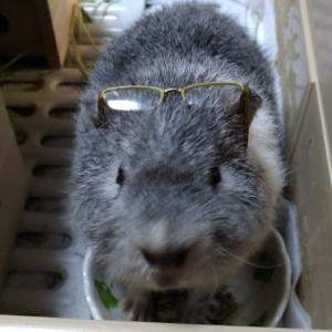 サイズぴったり‼安全に配慮しつつペットの眼鏡姿を激写しよう♪