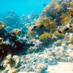 透き通る海にバラエティ豊かなスポット