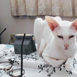 めんたいパーク 神戸三田 明太子 クーラーバック おにぎり オリエンタルショートヘア 猫