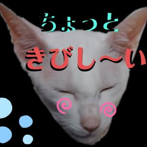 困った きびしい・・ 連絡なし 巨大クモ 隠れる 怖い オリエンタルショートヘア 猫
