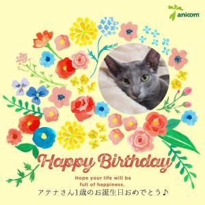 お誕生日 命名 1歳 ハッピーバースディ オリエンタルショートヘア 猫