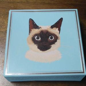 猫 チーズケーキ 美味しい シャム猫 オリエンタルショートヘア