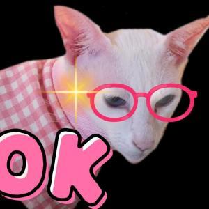 アイスクリーム 破格値 激安 大量購入 高級アイスクリーム オリエンタルショートヘア 猫