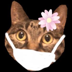 おもしろ 猫 マスク 楽しい オリエンタルショートヘア キジトラ 猫