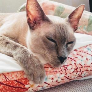 素麺 木箱 揖保の糸 突入 吐く シャム猫