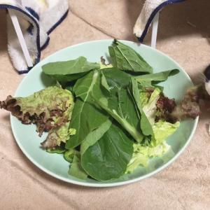 今日のサラダは小松菜入り