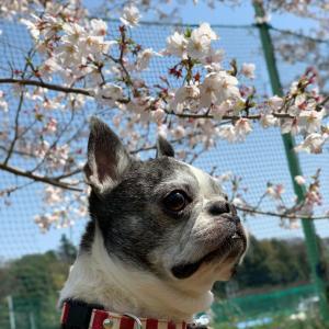 やさしい春の色