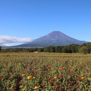 花の都公園の花々と富士山と